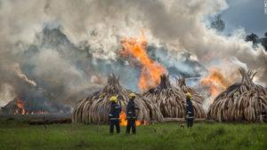 160430205556 06 kenya ivory burn super 169